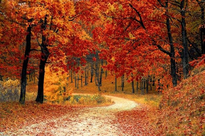 Du lịch New Hampshire chiêm ngưỡng mùa thu vàng